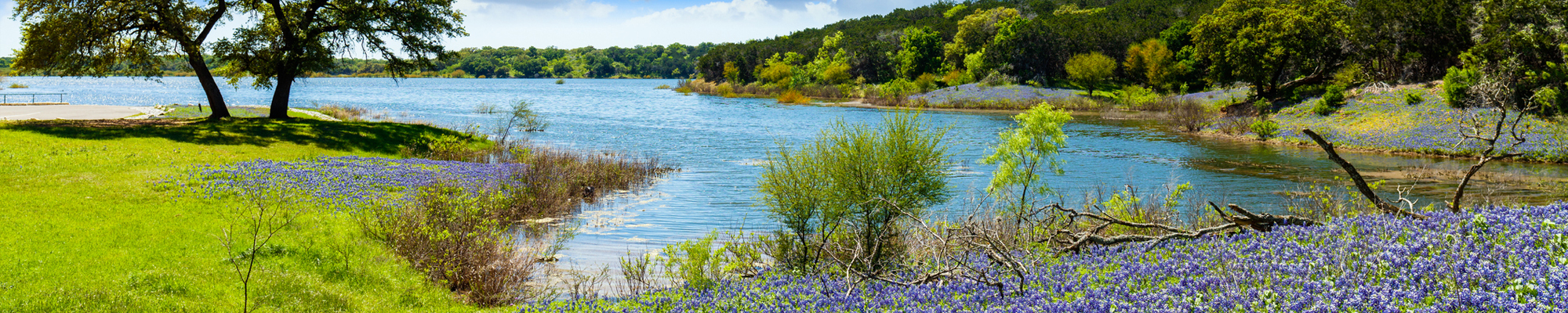 bluebonnets around a river
